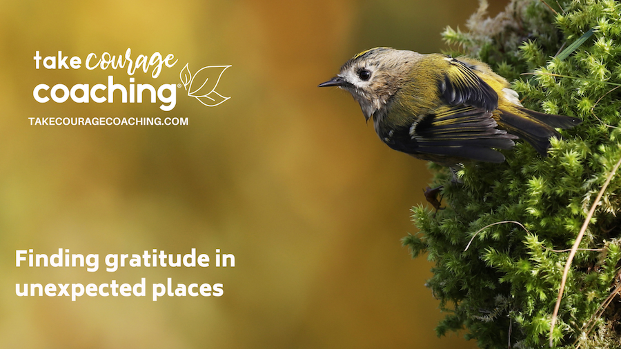 Finding gratitude in unexpected places might look like a tiny bird