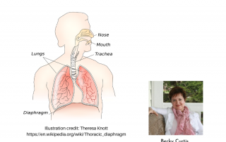 Illustration of the respiratory system for Becky's #1 pain and anxiety-management tool